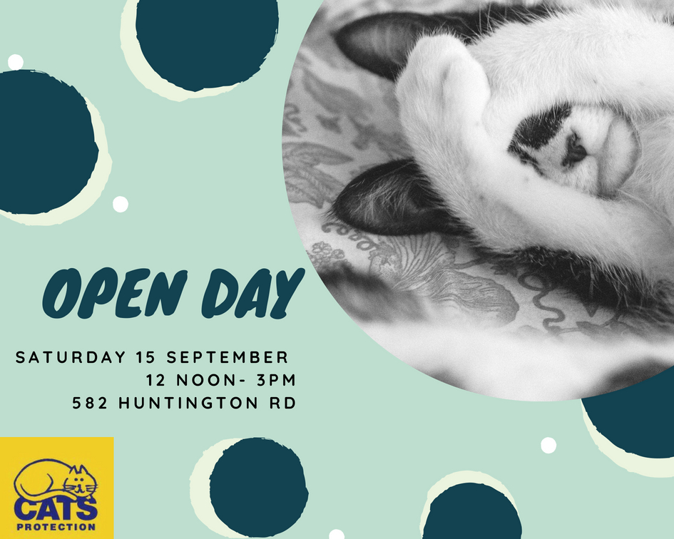 York cats protection open day