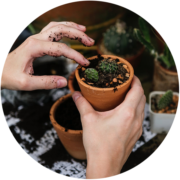 Gardening Life York > Your Local Link